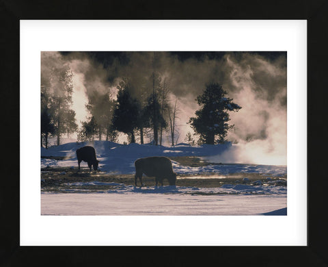 American Bison, Wyoming (Framed) -  Art Wolfe - McGaw Graphics