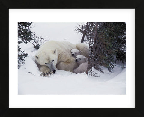 Snow Day  (Framed) -  Art Wolfe - McGaw Graphics