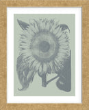Sunflower 8 (Framed) -  Botanical Series - McGaw Graphics