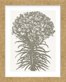 Lilies (Ivory & Burlap) (Framed) -  Botanical Series - McGaw Graphics