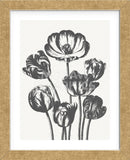 Tulips (Ivory & Ink) (Framed) -  Botanical Series - McGaw Graphics
