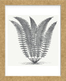 Fern (Ivory & Ink) (Framed) -  Botanical Series - McGaw Graphics