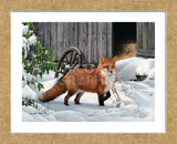 Fox and Barn (Framed) -  Russell Cobane - McGaw Graphics