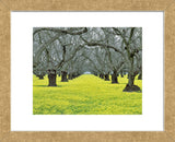 Orchard Carpet (Framed) -  Dennis Frates - McGaw Graphics
