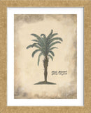 African Oil Palm (Framed) -  Annabel Hewitt - McGaw Graphics