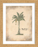 Plantain Palm  (Framed) -  Annabel Hewitt - McGaw Graphics