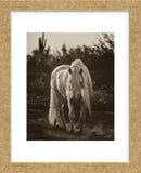Stallion in the Garden (Framed) -  Barry Hart - McGaw Graphics