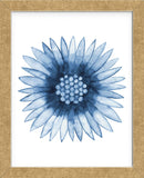 Blue Daisy (Framed) -  Cathe Hendrick - McGaw Graphics
