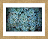 Echeveria III (Framed) -  Michael Hudson - McGaw Graphics