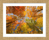 Autumn Spendour (Framed) -  Michael Hudson - McGaw Graphics