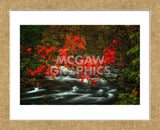 Fall in Smokies (Framed) -  Robert Lott - McGaw Graphics