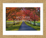 Lane in Fall (Framed) -  Robert Lott - McGaw Graphics