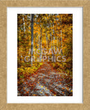 Ohiopyle Path (Framed) -  Robert Lott - McGaw Graphics