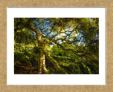 Japanese Maple (Framed) -  Robert Lott - McGaw Graphics