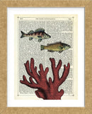 Two Fish with Coral (Framed)