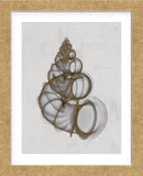Wentletrap Shell (Framed) -  Bert Myers - McGaw Graphics