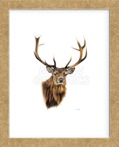 Stag White Background Framed Mcgaw Graphics