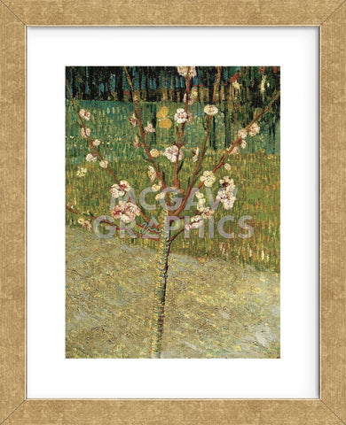 Almond Tree In Blossom 1888 Framed Mcgaw Graphics