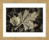 Frosted Leaves (Framed) -  David Lorenz Winston - McGaw Graphics