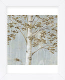Birch Study II (Framed) -  Daphné B - McGaw Graphics