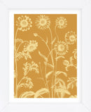 Chrysanthemum 20 (Framed) -  Botanical Series - McGaw Graphics
