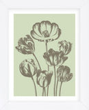 Tulip 11 (Framed) -  Botanical Series - McGaw Graphics