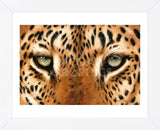 Leopard Eyes Painting (Framed) -  Sarah Stribbling - McGaw Graphics
