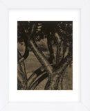 Dancing Trees, 1922 (Framed) -  Alfred Stieglitz - McGaw Graphics