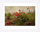 Poppy Garden (Framed) -  David Lorenz Winston - McGaw Graphics