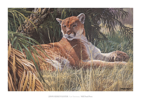 Last Sanctuary - Florida Panther (detail)