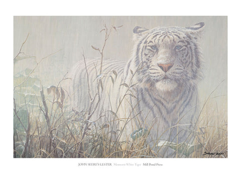 Monsoon - White Tiger (detail)