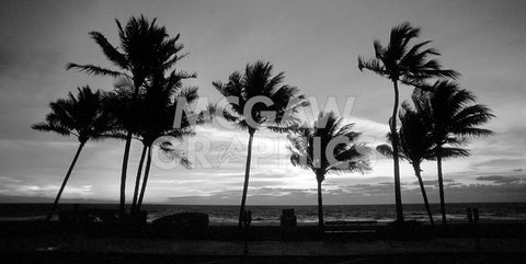 Sunrise Palms -  Harold Silverman - McGaw Graphics