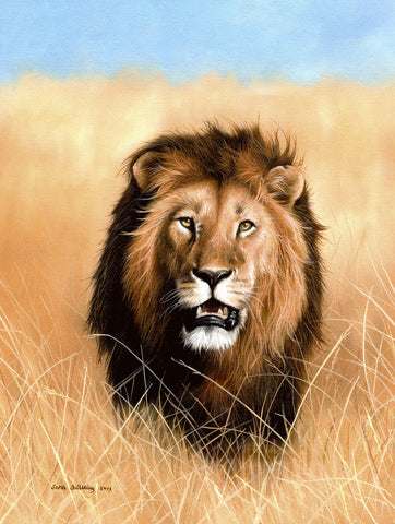 African Savannah Lion -  Sarah Stribbling - McGaw Graphics
