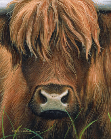 Cow Portrait -  Sarah Stribbling - McGaw Graphics