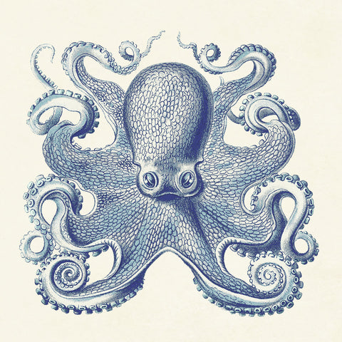 Octopus I -  Sparx Studio - McGaw Graphics