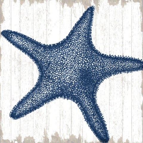 Seaside Starfish -  Sparx Studio - McGaw Graphics