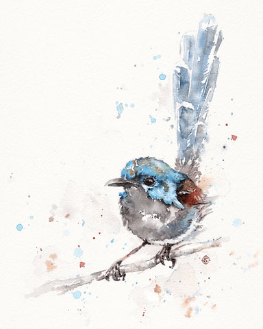 Mischief in the Making (Variegated Fairy Wren) -  Sillier than Sally - McGaw Graphics