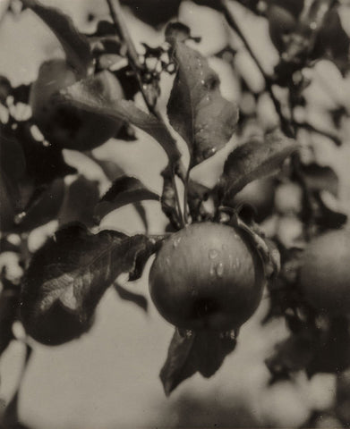 Alfred Stieglitz - Apple and Drops of Rain, Lake George, 1922
