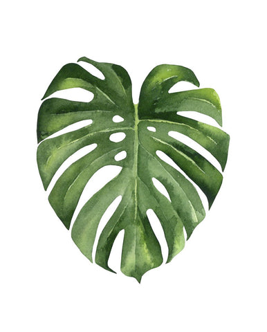 Monstera II -  Ann Solo - McGaw Graphics