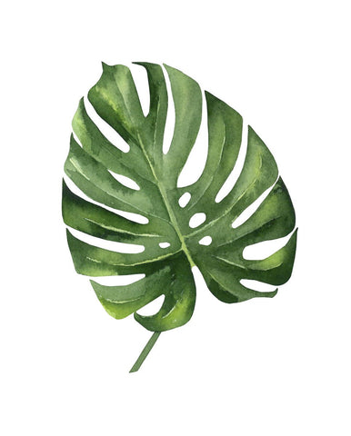 Monstera III -  Ann Solo - McGaw Graphics