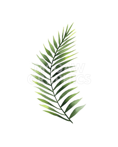 Palm Leaf II -  Ann Solo - McGaw Graphics