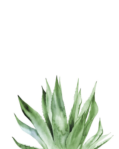 Agave I -  Ann Solo - McGaw Graphics