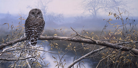 Autumn Mist - Barred Owl -  John Seerey-Lester - McGaw Graphics