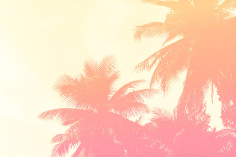 Summer Photography - Coconut Palm Trees