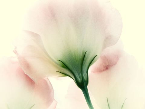 Pink Flower -  Judy Stalus - McGaw Graphics