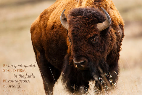 Montana Bison (Be on your guard...) -  Jason Savage - McGaw Graphics