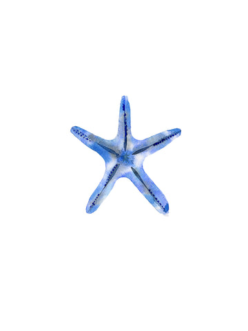 Starfish -  Ann Solo - McGaw Graphics