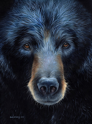 Sarah Stribbling - Black Bear