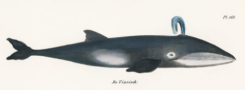 Whale, 1824 - McGaw Graphics
