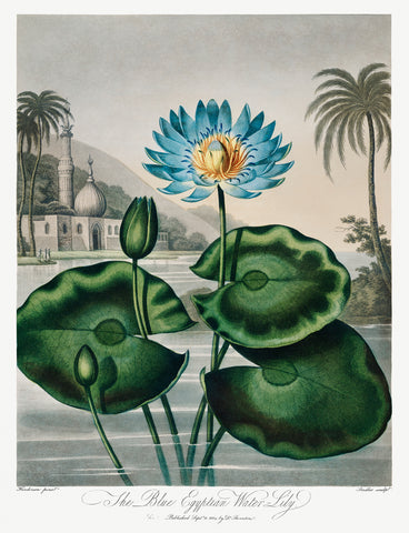The Blue Egyptian Water-Lily, 1807 - McGaw Graphics